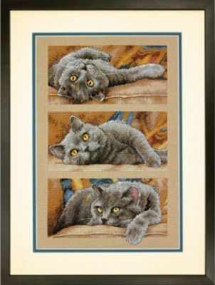 35301-70-DMS Max The Cat