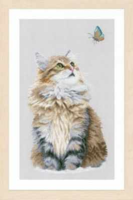 PN-0171041 Forest cat